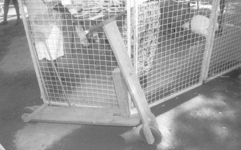 Photo 5. Une trottinette à l'ancienne