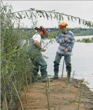 Entretien de la mangrove