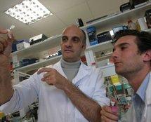 Professeur Philippe Vallet de l' Inserm, qui travaille sur la nouvelle hormone