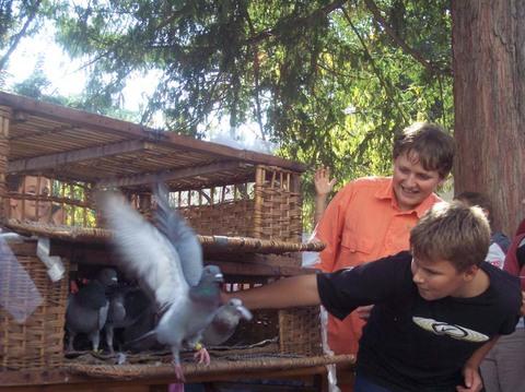 Des jeunes et des pigeons voyageurs