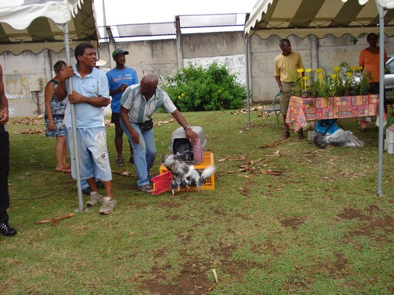 La future association colombophile de Vieux Habitants au marché du Bourg