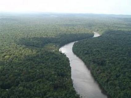 La forêt guyanaise