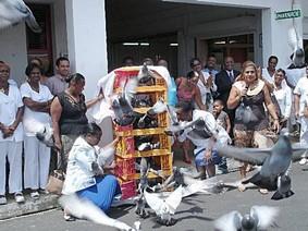 Pigeon Antilles pour un autre site plus moderne au bénéfice de la colombophilie internationale.