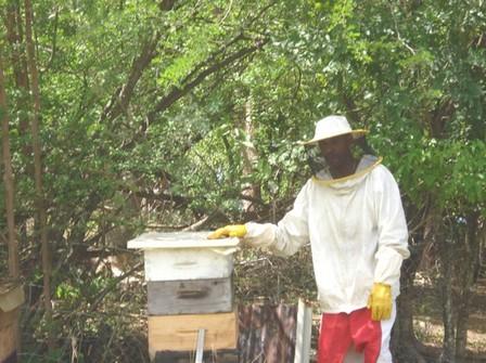 Ange, au milieu des abeilles, photo Bouillante.net