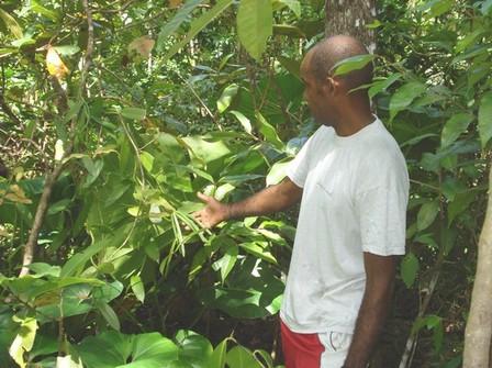Ange montrant le résultat de ses pollénisations, photo Bouillante.net