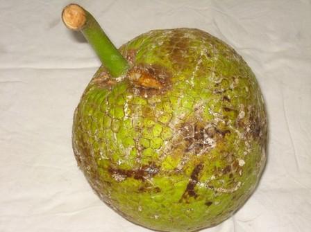 Penbwa, fruit à pain, photo atout guadeloupe jj