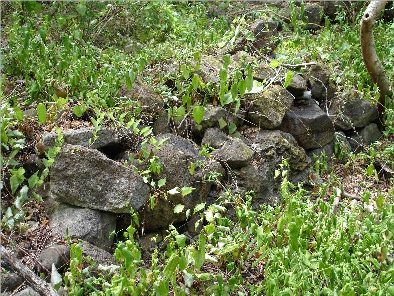 Le vieux muret de pierres