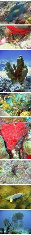 Une plongée en Guadeloupe à la découverte du corail tropical