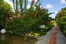 Jardin tropical exterieur hôtel Rotabas