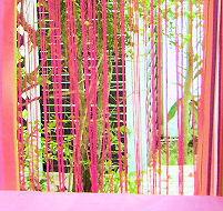 Location de bungalow en Guadeloupe  Anthurium