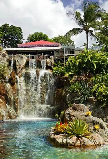 Visite au jardin botanique de deshaies en guadeloupe for Jardin botanique guadeloupe
