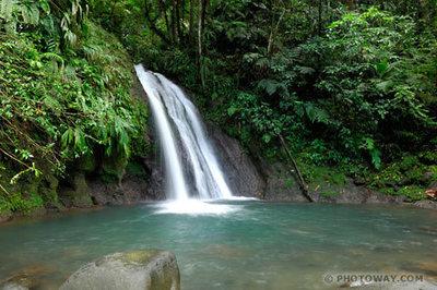 Réserver une location en Basse Terre : nature et authenticité
