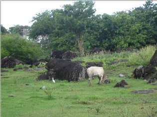 guadeloupe- prairies