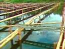 parc aquacole Guadeloupe