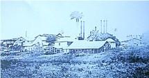 Commune de Baie mahault-productions