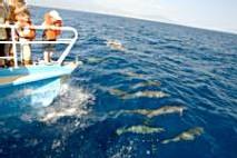 dauphin baleine guadeloupe
