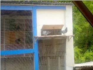 colombophiles de la commune de Bouillante-posées sur la trappe