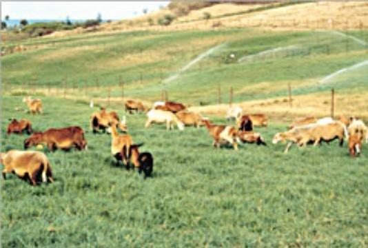 Un élevage en guadeloupe