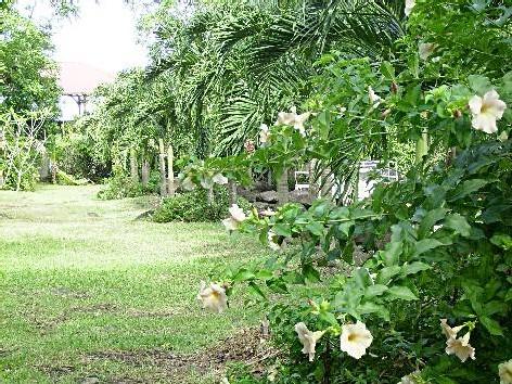La Lise, le jardin
