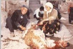 Le sacrifice des moutons