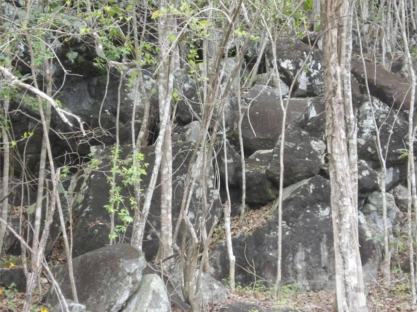 Des centaines de grosses roches, retenues par les racines des arbres. Photo Atout-Guadeloupe