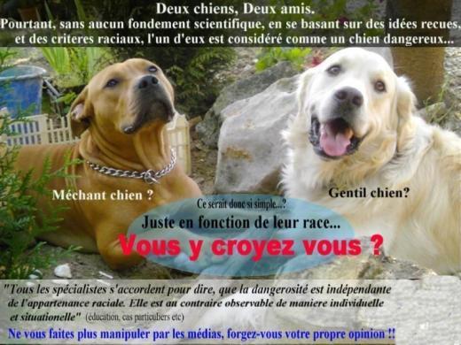 La nouvelle loi sur les chiens dits 'dangereux' est votée dans l'hypocrisie la plus totale...
