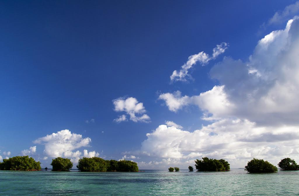 Guadeloupe mangrove