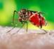 http://www.atout-guadeloupe.com/Zika-Guadeloupe-Qu-est-ce-que-le-virus-Zika_a5073.html