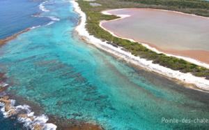 Découvrez la plage des Salines en Guadeloupe