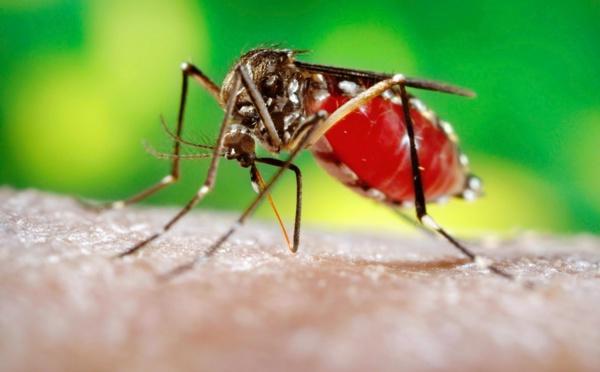 Zika Guadeloupe : Qu'est ce que le virus Zika ?