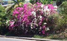 20 mars 2009, c'est le printemps aussi en Guadeloupe