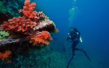 Plongée Guadeloupe : c'est Carnaval aussi sous l'eau