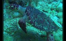 La plongée sous marine selon Atout Guadeloupe