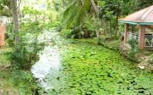 Guadeloupe, la source POUCET