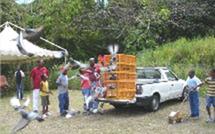 Guadeloupe, l' ALEFPA de Bouillante